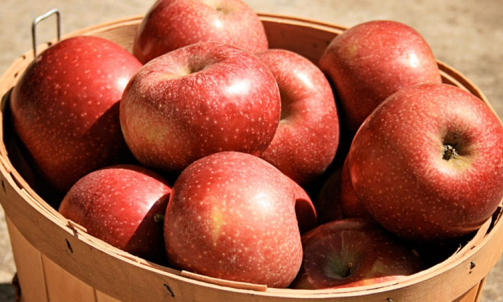 basket of georgia grown apples